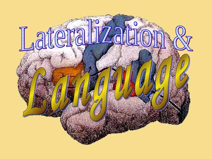 Lateralization & Language