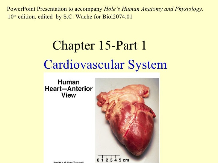 chapter 15 the cardiovascular system part 1. Black Bedroom Furniture Sets. Home Design Ideas