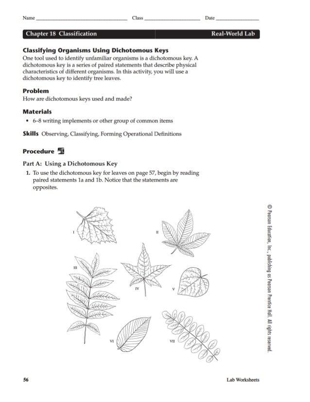 chapter-18-real-world-lab-dichotomous-key-leaves-1-638.jpg?cb=1390466299
