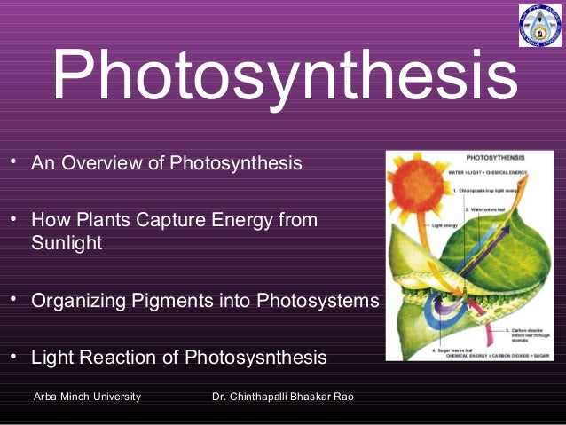 Photosynthesis • An Overview of Photosynthesis • How Plants Capture Energy from Sunlight • Organizing Pigments into Photos...