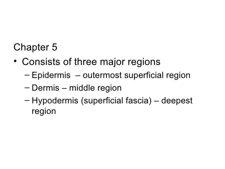 <ul><li>Chapter 5 </li></ul><ul><li>Consists of three major regions </li></ul><ul><ul><li>Epidermis  – outermost superfici...