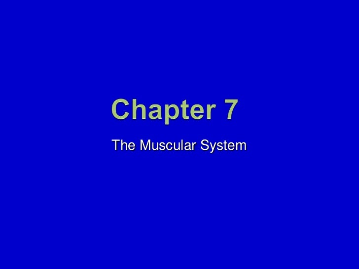 7. The Muscular System