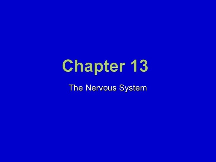 13. The Nervous System