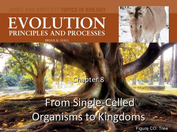 Chapter 8  From Single-Celled Organisms to Kingdoms Figure CO: Tree © Carlos Caetano/ShutterStock , Inc.