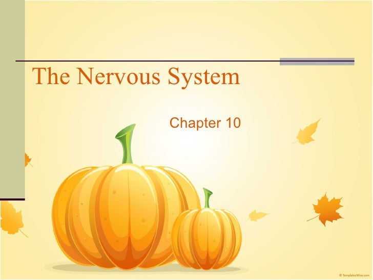 The Nervous System Chapter 10