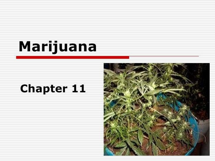 Chapter 11   Marijuana