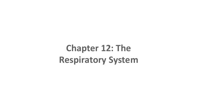 Chapter 12: The Respiratory System
