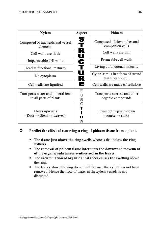 Xylem And Phloem Worksheet - wiildcreative