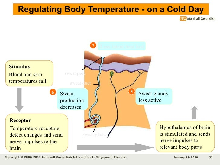 Low Body Temp And Synthroid
