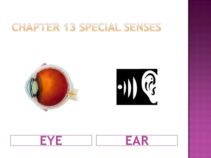 Chapter 13 Special Senses<br />EYE<br />EAR<br />