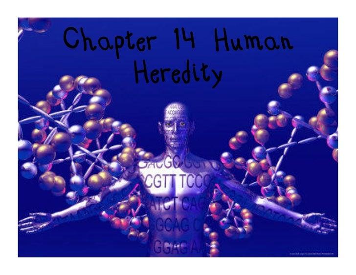 Chapter 14 Human     Heredity
