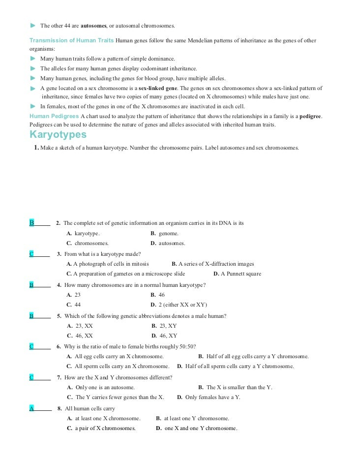 Chromosomes Worksheet - Khayav