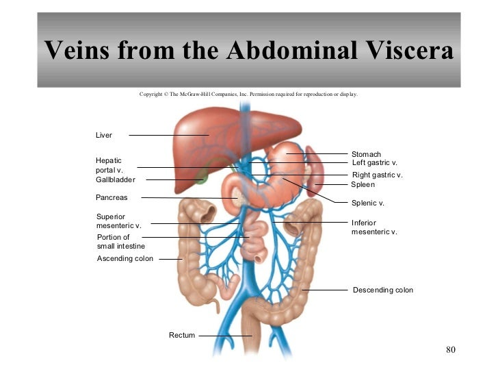 Ascending Colon - Pictures, posters, news and videos on your pursuit ...