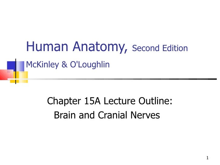 Human Anatomy,  Second Edition McKinley & O'Loughlin   Chapter 15A Lecture Outline: Brain and Cranial Nerves