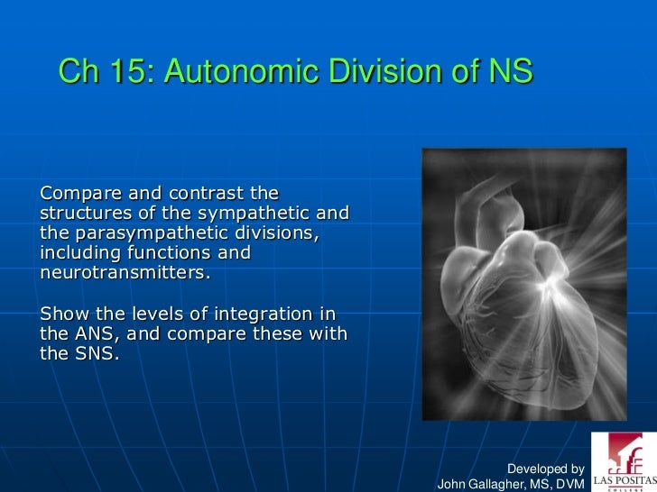 Ch 15: Autonomic Division of NSCompare and contrast thestructures of the sympathetic andthe parasympathetic divisions,incl...