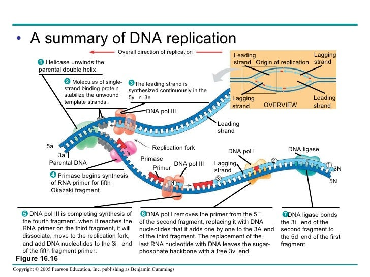 double helix chapter summary Chapter 12 dna 122 structure of dna chromosome dna double helix coils organizing proteins chapter 12 dna 122 structure of dna nucleotide hydrogen.