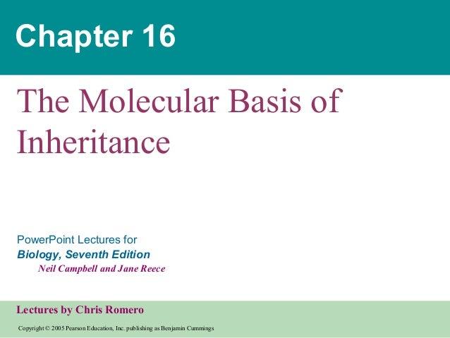 Chapter 16 molecular inheritance