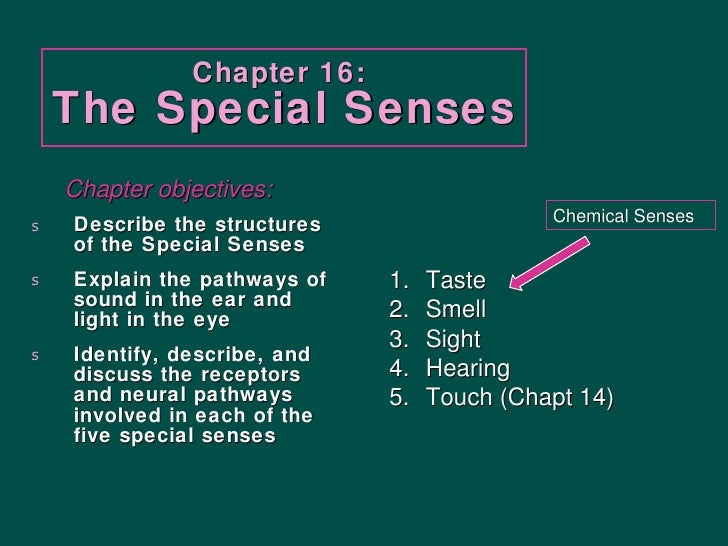 Chapter 16:  The Special Senses <ul><li>Describe the structures of the Special Senses </li></ul><ul><li>Explain the pathwa...