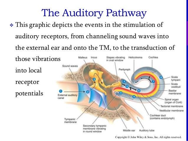 secondary tympanic membrane diagram