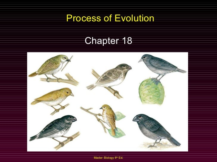 Process of Evolution Chapter 18