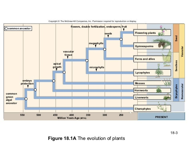 chapter 18 evolution of plants Complete summary of jared diamond's guns, germs, and steel enotes plot summaries chapter 18 summary of more than 13,000 years of human evolution and.