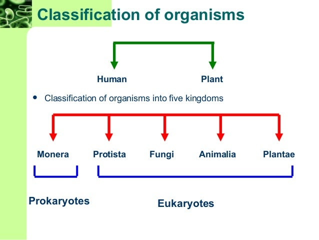 an analysis of bacteria as microscopic singular cell organisms of the prokaryote kingdom Prokaryote or eukaryote a unique microorganism from and structome analysis the organism was 10 host cell and the bacteria that.
