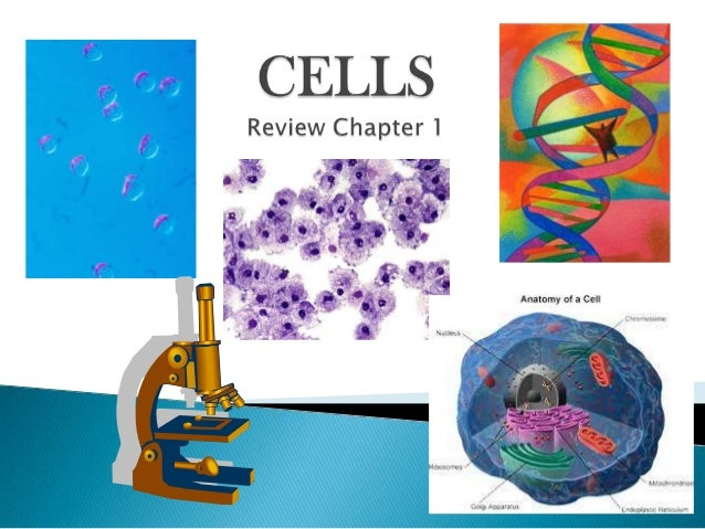    1. All living things are made of cells.   2. The cell is the basic structural and    functional unit of life.   3. A...