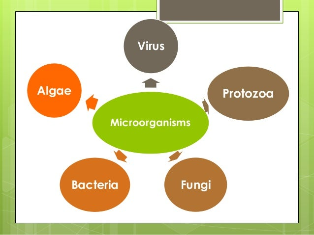 identify the differences between bacteria viruses fungi and parasites Fungi vs bacteria microbes such as bacteria and fungi, are very tiny organisms found in just about every ecosystem or elsewhere in the world and can associate.