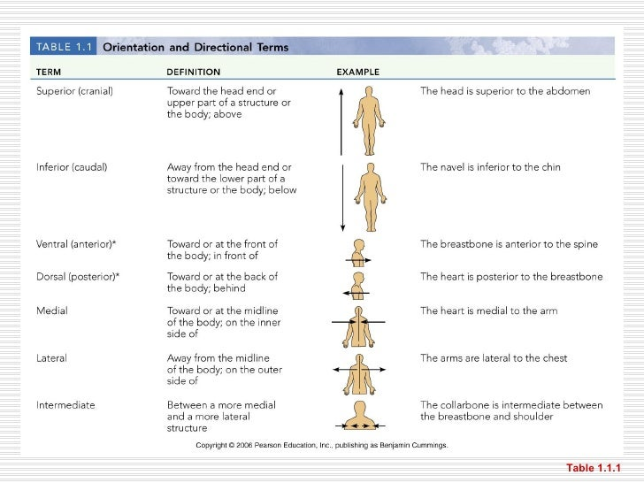 Body Cavities And Membranes Quiz Chapter 1--organization and general ...