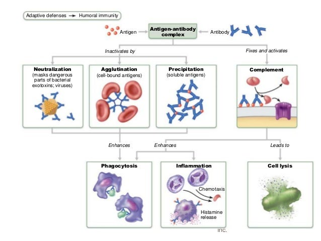 the immune system chapter 20 1 page 1 chapter 20: the immune system pathogens: microscopic organisms that cause disease viruses bacteria fungi protists how does a body defend against invasion.