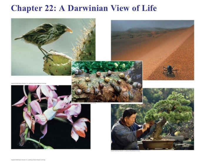 Chapter 22: A Darwinian View of Life