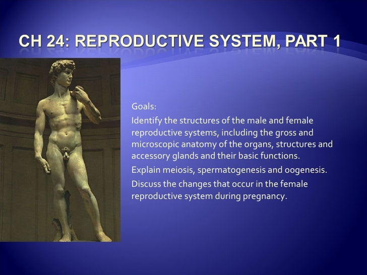 Goals: Identify the structures of the male and female reproductive systems, including the gross and microscopic anatomy of...