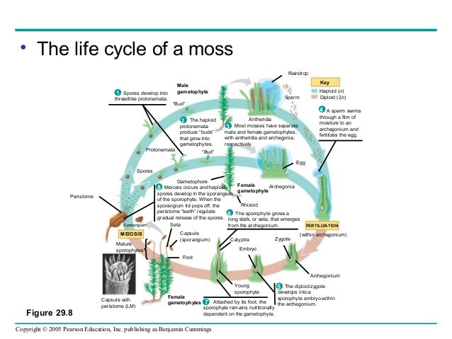 the biology and life cycle of Quizlet provides cell life cycle blood biology activities, flashcards and games start learning today for free.