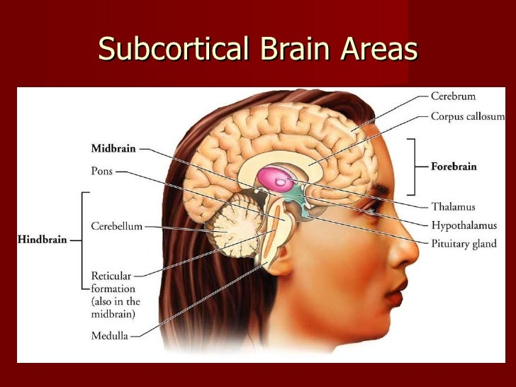 the amygdala corticotropin-releasing factor steroids and stress