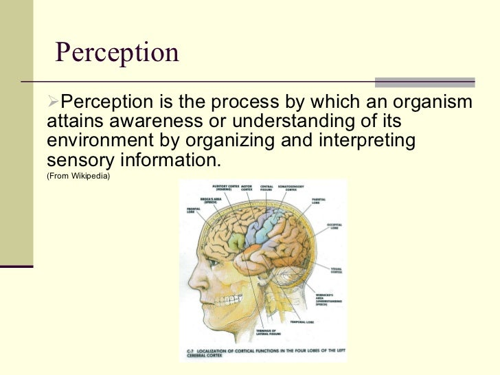 Perception  <ul><li>Perception is the process by which an organism attains awareness or understanding of its environment b...