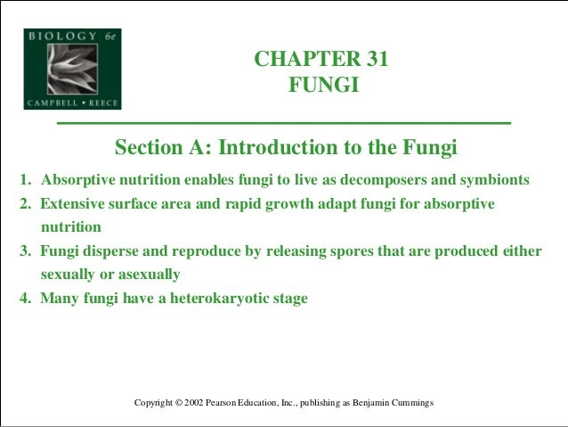 CHAPTER 31 FUNGI Copyright © 2002 Pearson Education, Inc., publishing as Benjamin Cummings Section A: Introduction to the ...