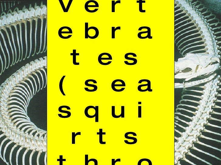 Chapter 34: Vertebrates (sea squirts through birds)