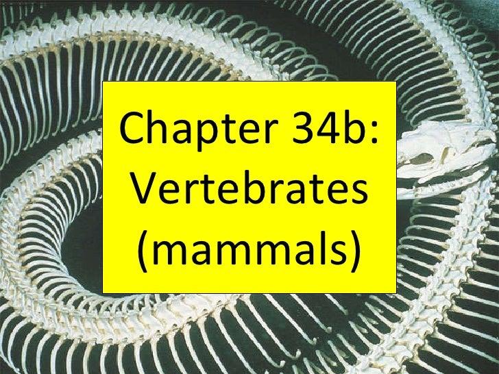Chapter 34b: Vertebrates (mammals)