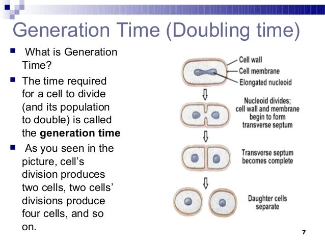 Generation time of e coli
