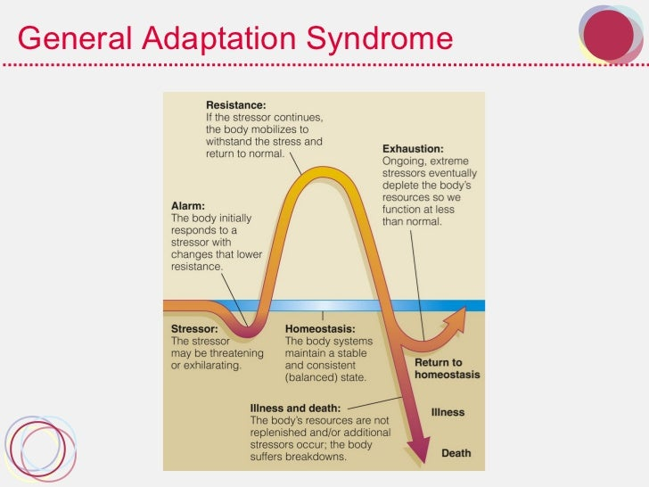 general adaption syndrome Converging data indicate the possible existence of a general adaptation  syndrome (gas) in which different types of stress evoke identical.