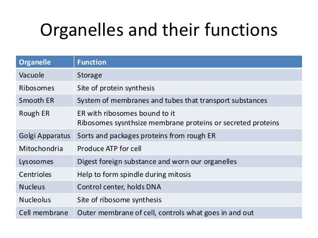 Cell types and organelles worksheet