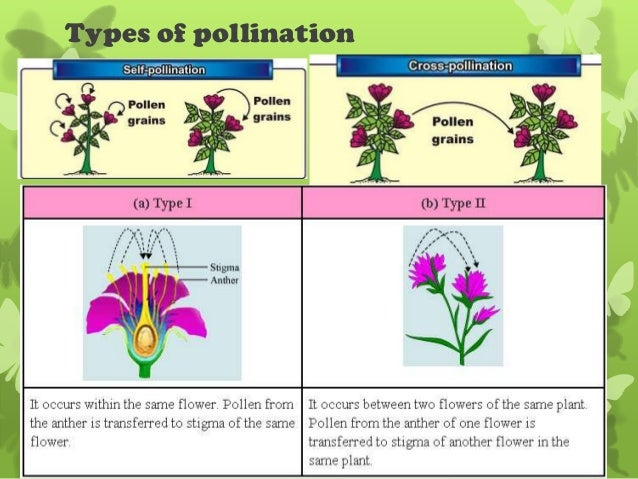 Wind Pollination Diagram Functions Of Plant Parts Qld Science