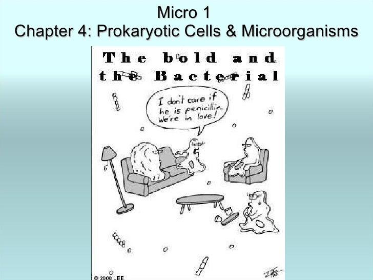 Micro 1  Chapter 4: Prokaryotic Cells & Microorganisms