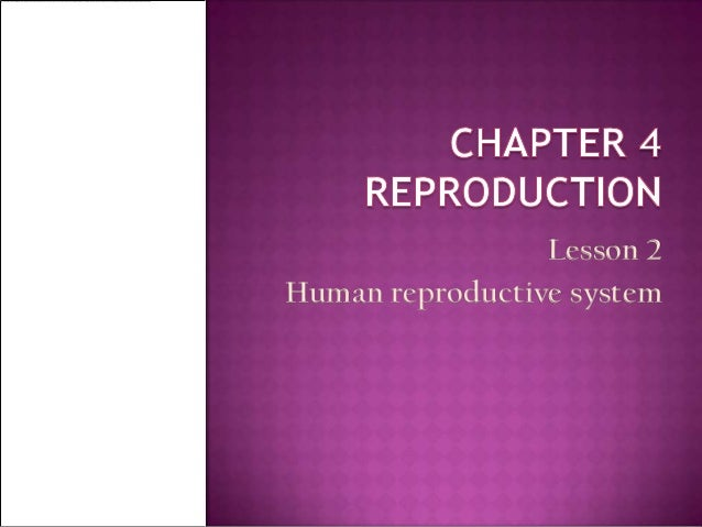Lesson 2Human reproductive system