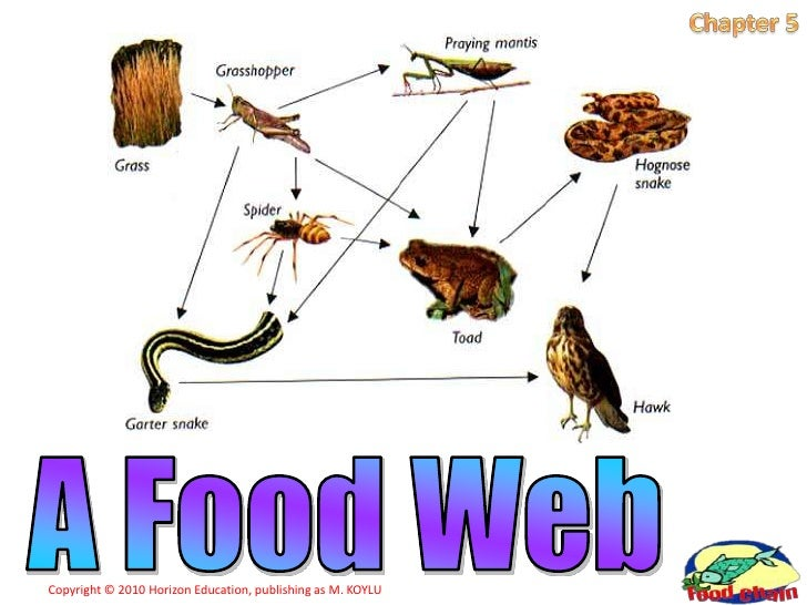 Cane Toad Food Chain 28 Images Cane Toad Food Chain Diagram