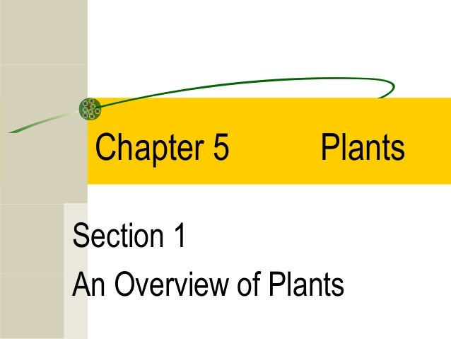 Chapter 5         PlantsSection 1An Overview of Plants