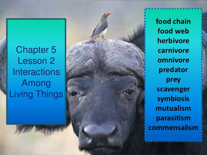 Chapter 5 Lesson 2 Interactions Among Living Things