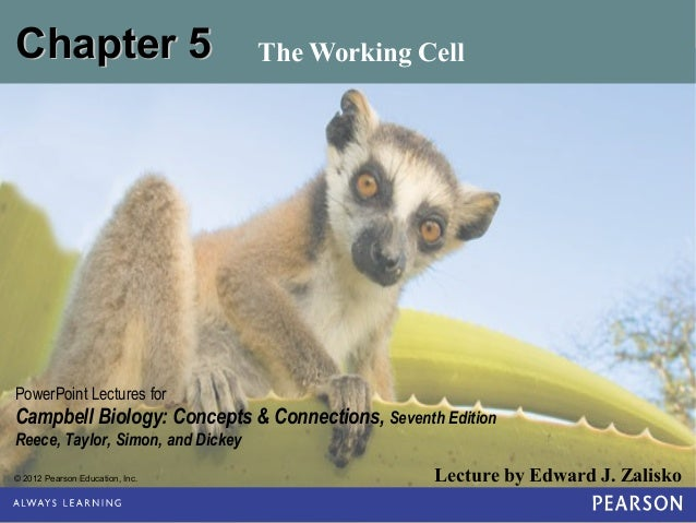 Chapter 5  The Working Cell  PowerPoint Lectures for  Campbell Biology: Concepts & Connections, Seventh Edition Reece, Tay...