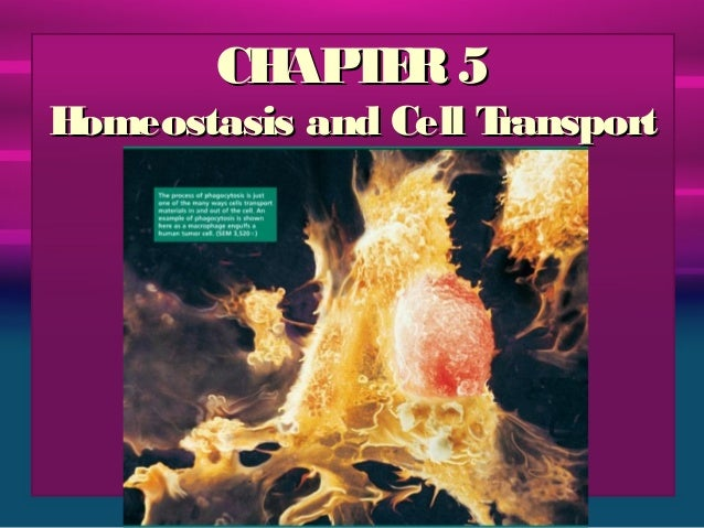 Chapter 5 - Cell Transport