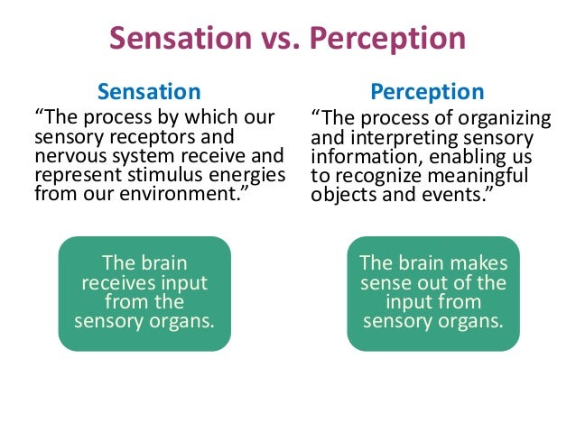 sensation and perception paper Perception and your sense of reality are the products of evolution senses  the  distinction between sensation and perception is not always clear when we.